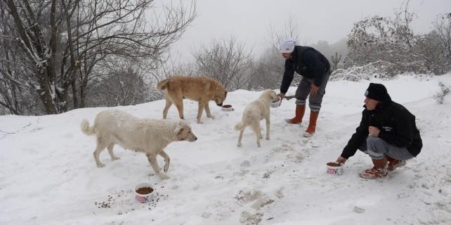 Aç-Hayvanlar-Beslendi-7-642×320